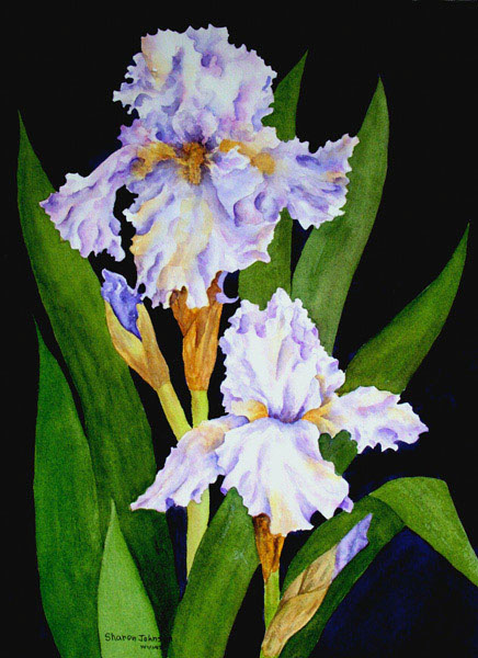 "Sharon Johnson - ""Lavender Iris"""