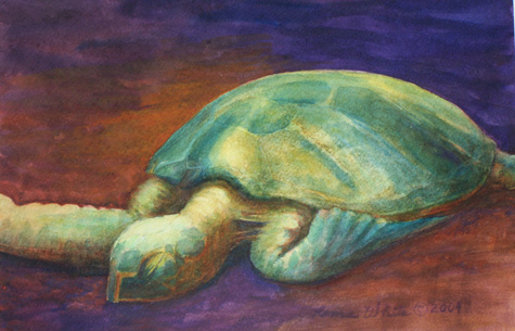 Tired Turtle