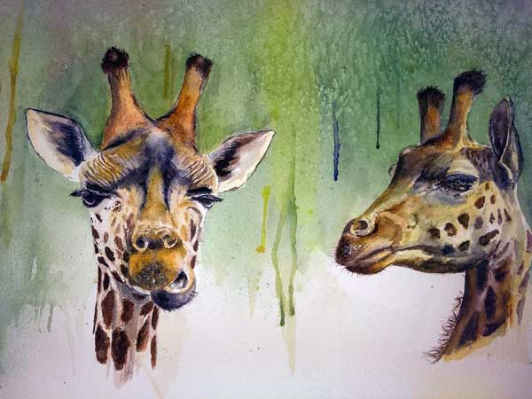 Jane C. Michael - Giraffes at the Wilds watercolor